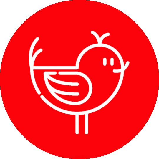 پرنده فروشی  شهر قدس