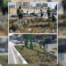 آغاز عملیات گلكاری و نهالكاری بهاره در سطح شهر