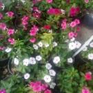 نمایشگاه گل و گباه ریحانه شهر قدس